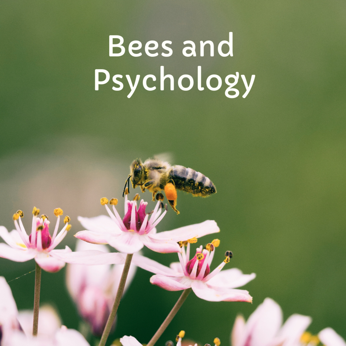 Being chased by bees could mean you are anxious about something.