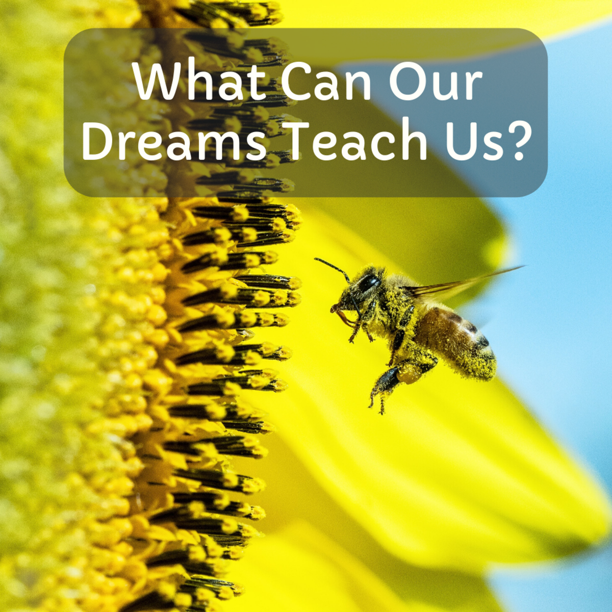We can apply much of what we learn from our dreams to our daily lives.