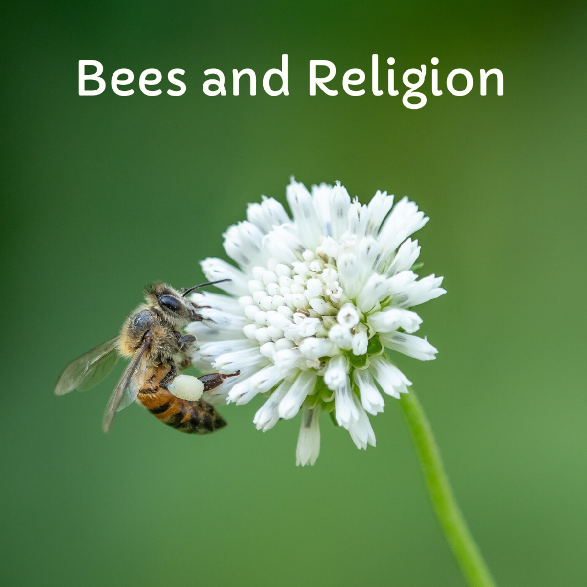 Many religions have powerful symbolism surrounding bees.