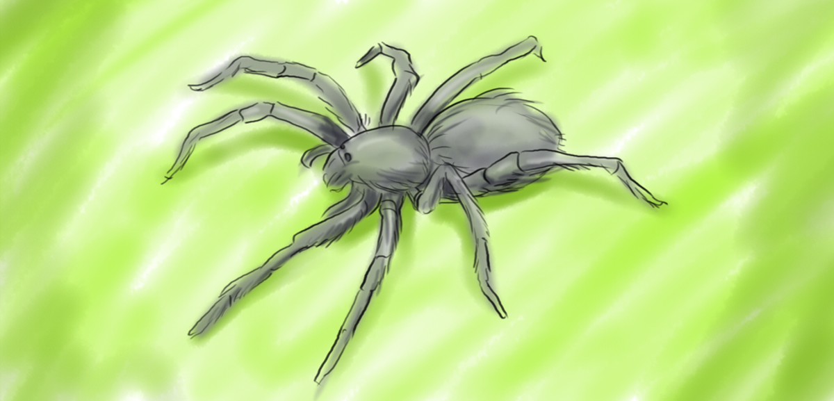 The spider, associated with selfishness, is the least evolved Scorpio symbol.