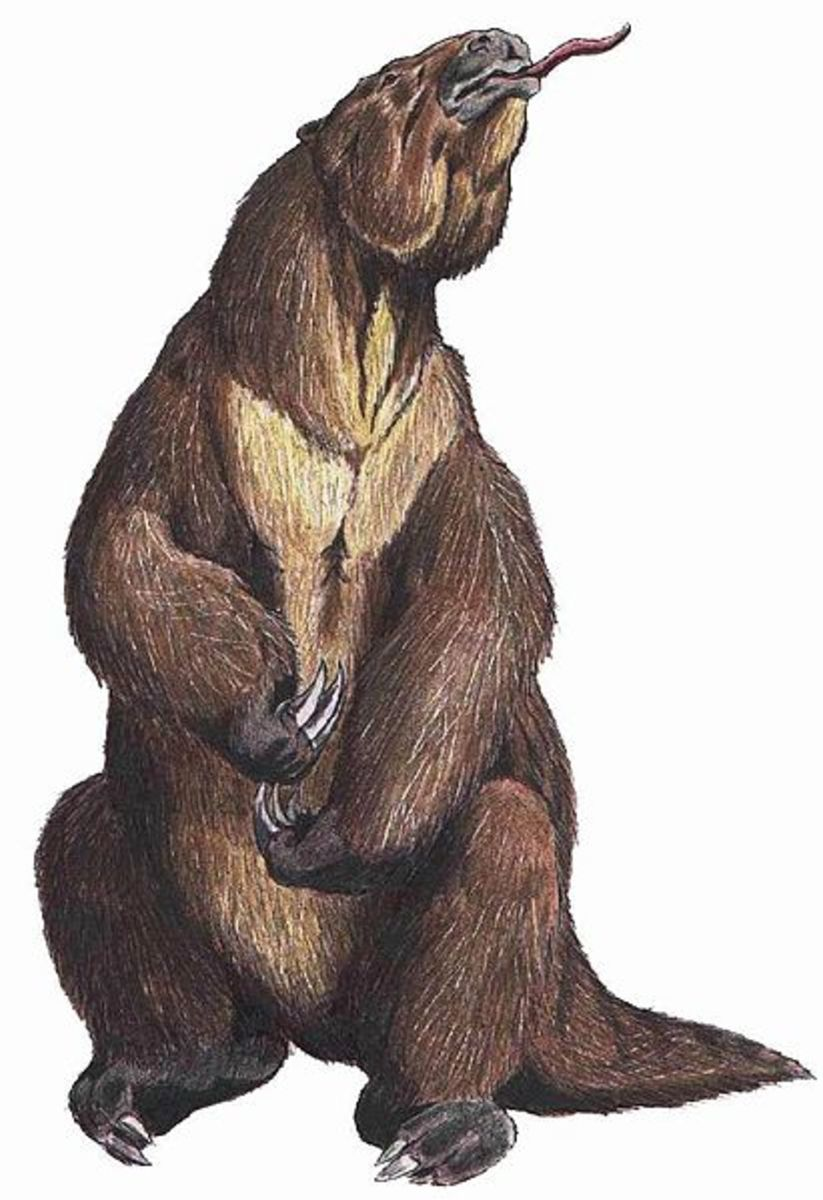 The Mapinguari of South America