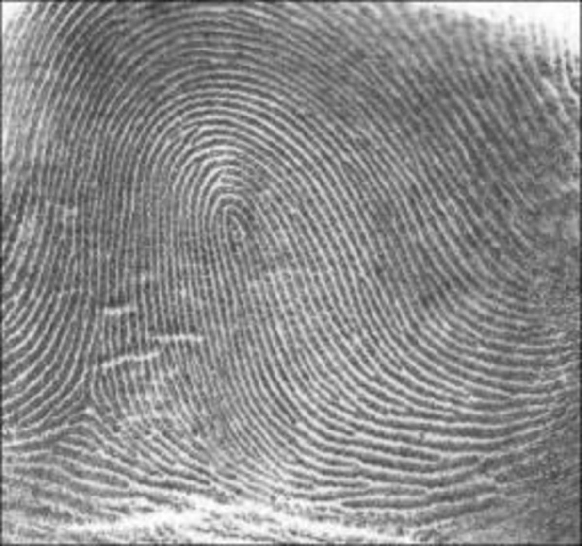 The Loop  sc 1 st  Exemplore & What Your Fingerprints Say About You: The Link Between ...