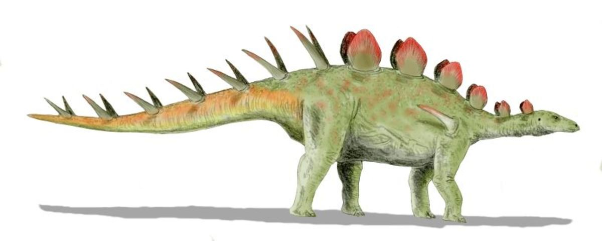 An artist's rendition of Chialingosaurus, an example of a stegosaur which may have looked similar to eyewitness accounts of Mbielu-mbielu-mbielu.
