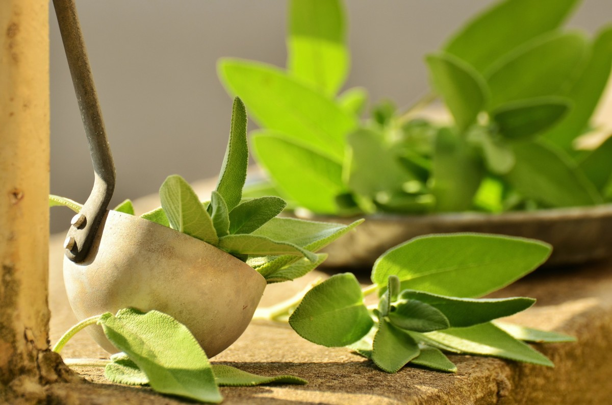 Sage is an ingredient commonly used in smudging rituals.