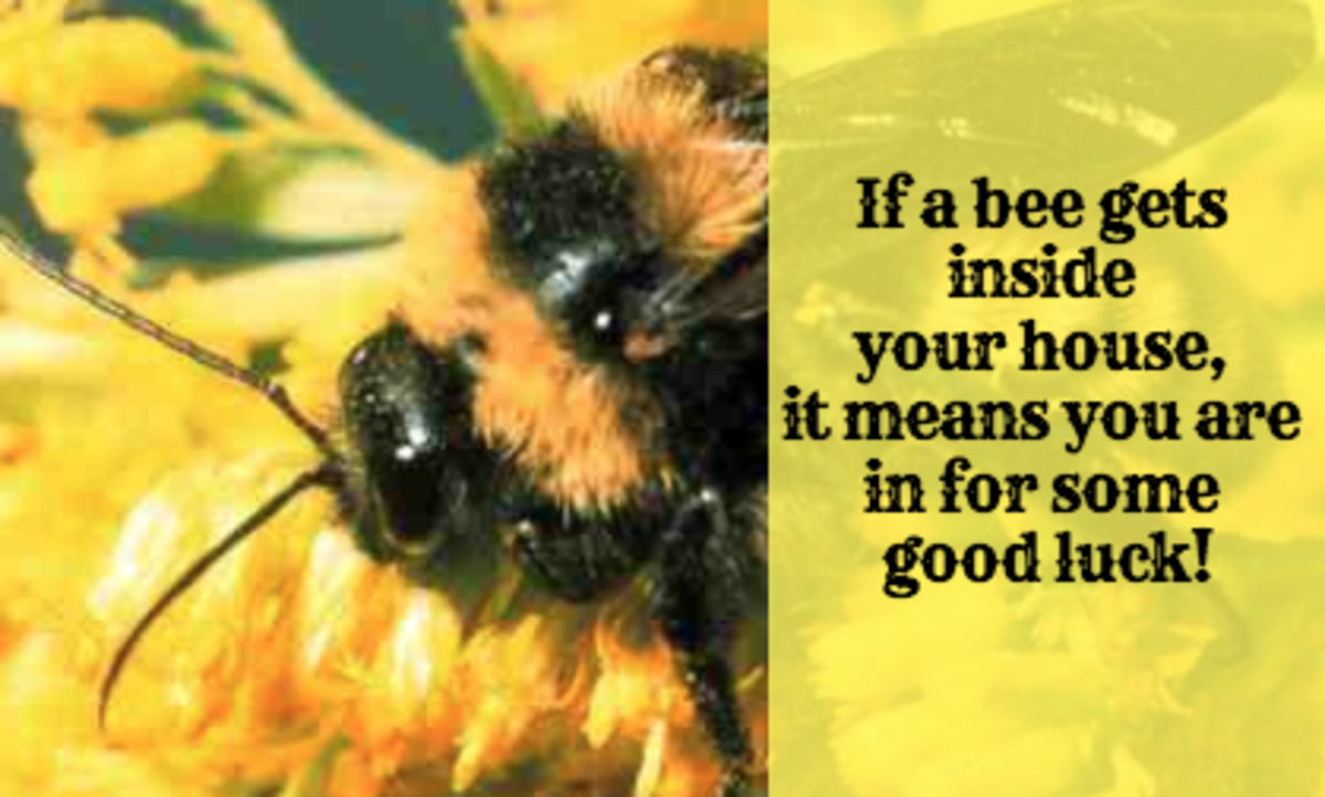 Bees can be signs of good luck!