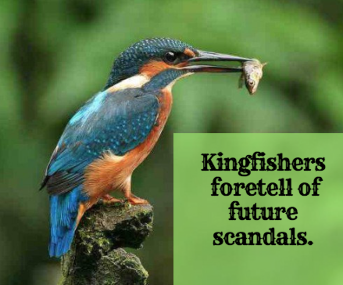Kingfishers are omens, foretelling of future scandals.