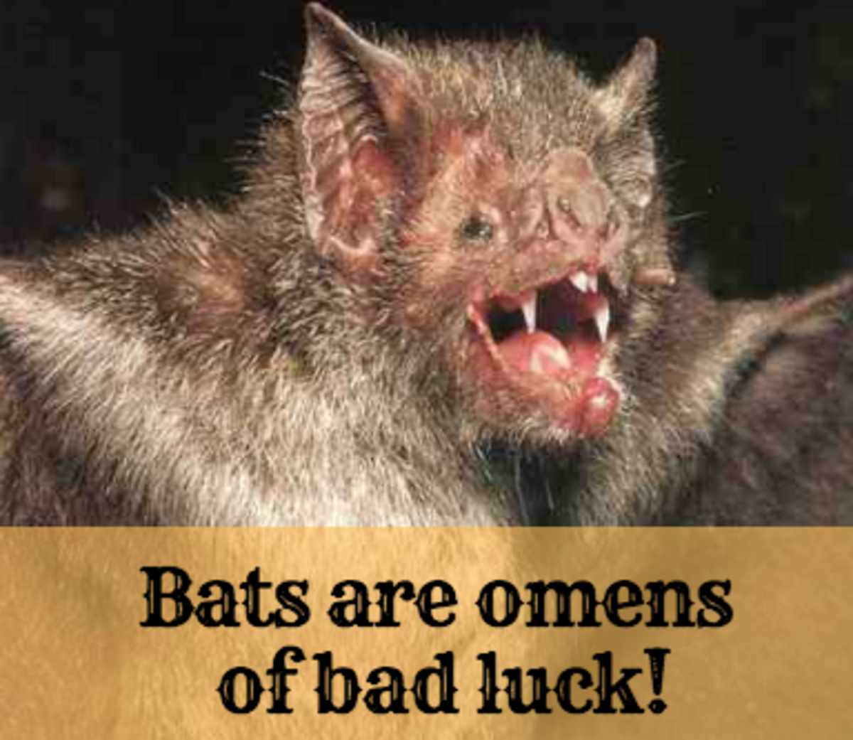 Be weary of vampire bats.