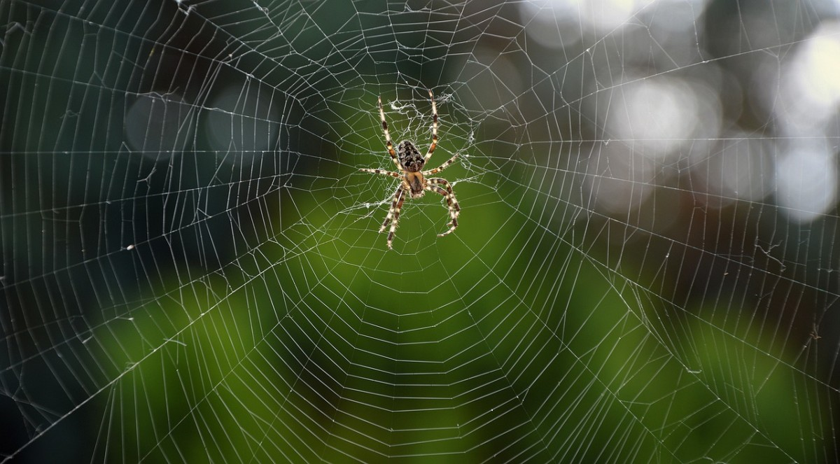 A spider sitting at the center of its web can represent the Self.