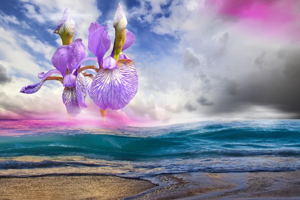 how-to-interpret-flowers-as-dream-symbols