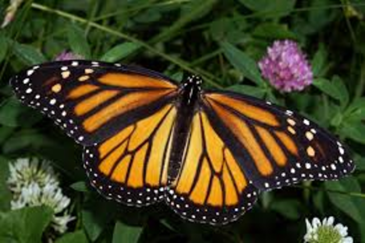The butterfly is a symbol of reincarnation.