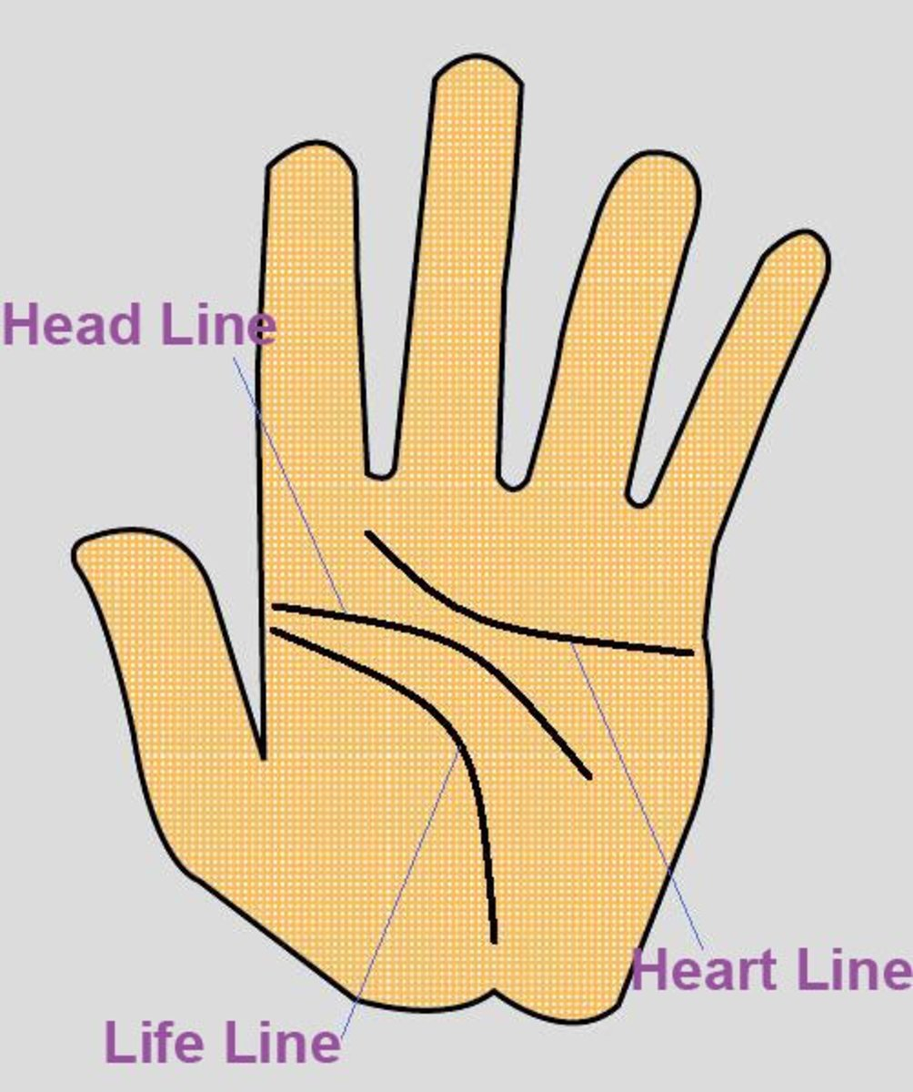 Three Major Lines in Palmistry