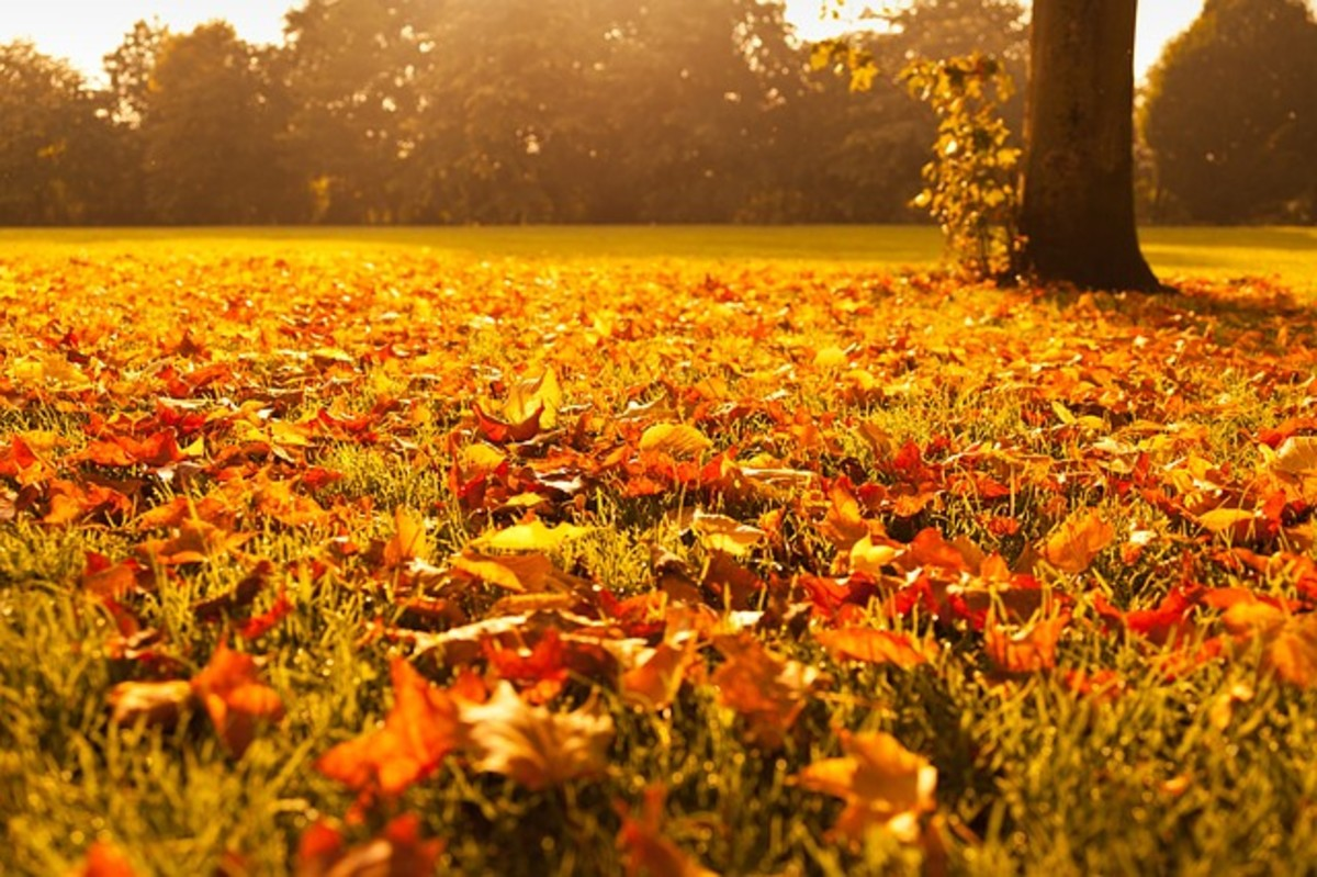 Autumn glory—you can't beat it.