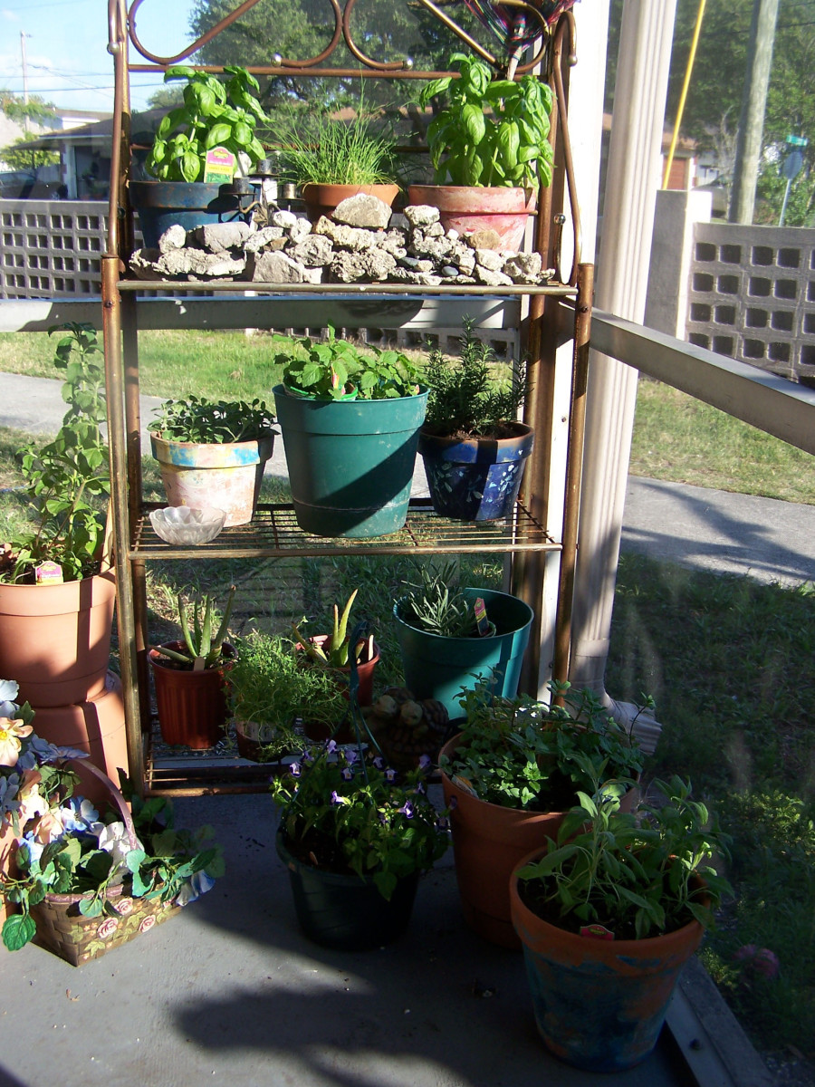 You can grow herbs and plants even in urban settings.