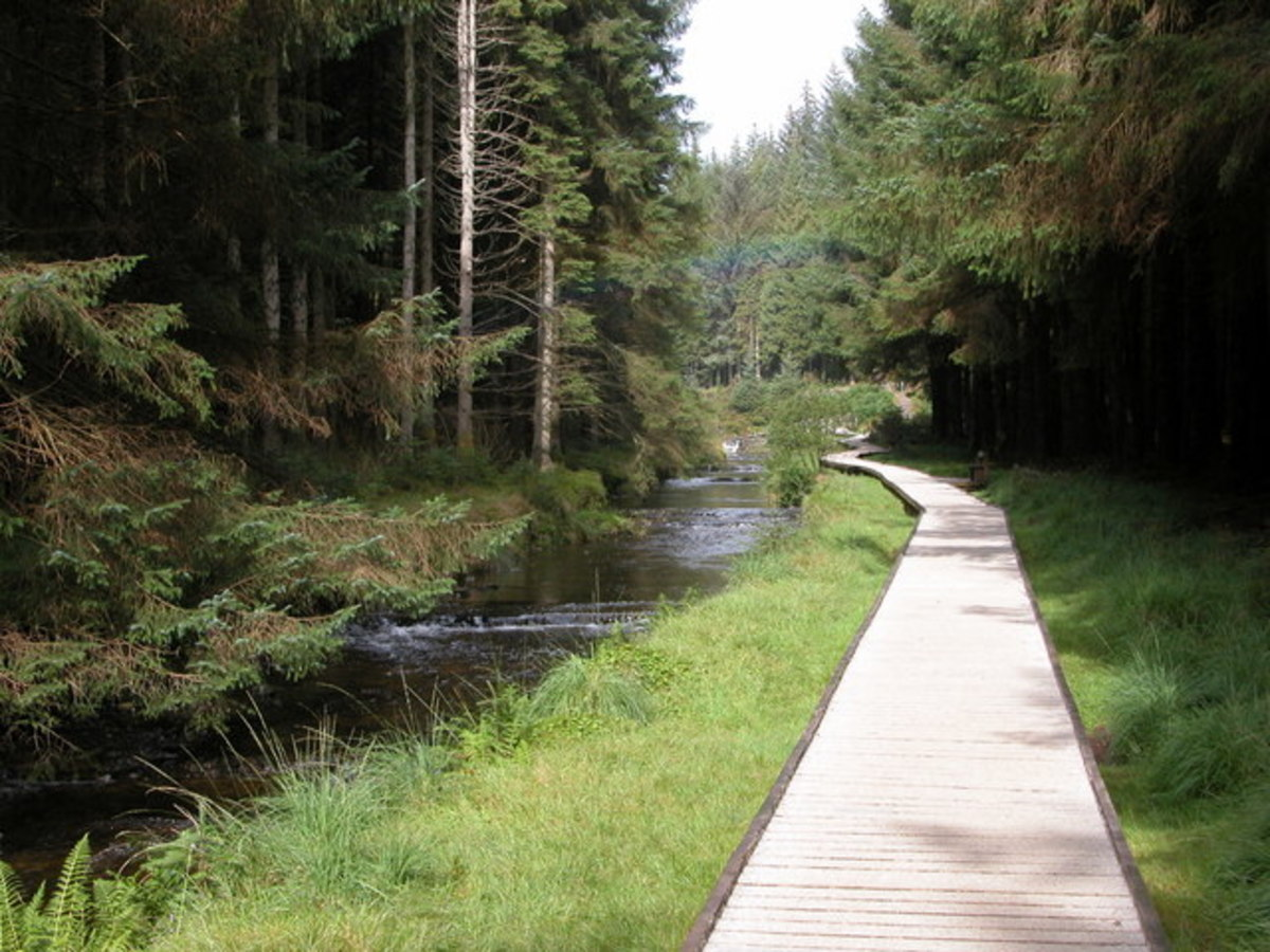 The infant River Severn, three miles from source, in the Hafren Forest, Powys, Wales