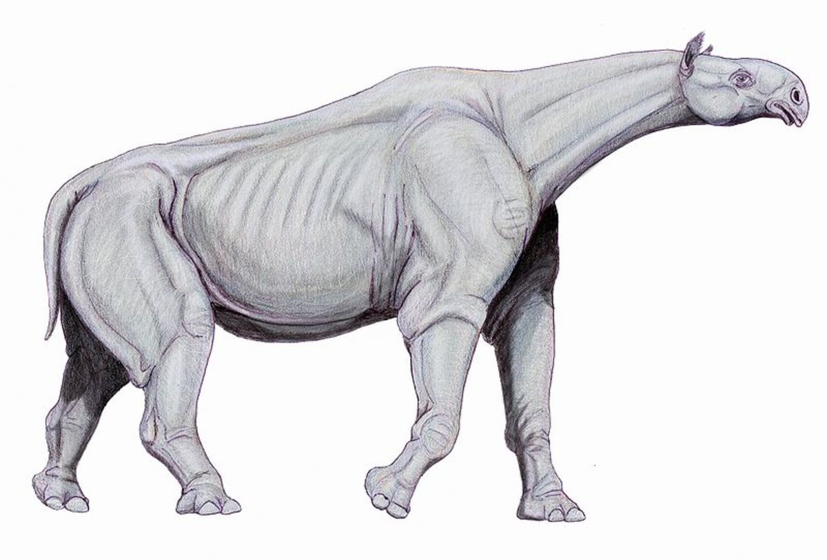 Paraceratherium was a massive prehistoric relative of the rhinoceros.