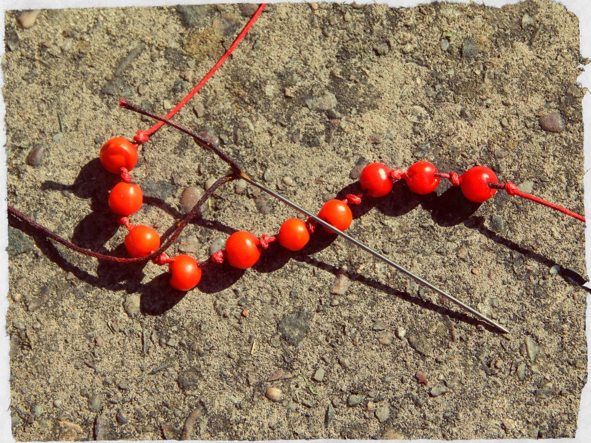Threading your rowan berries.