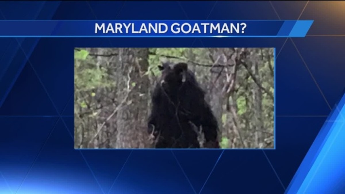 A screenshot from a TV story on the Goatman.