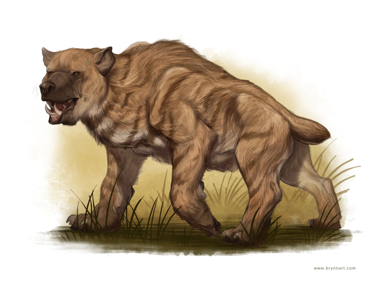 A drawing of a Nandi Bear, which is possibly a misidentified hyena.