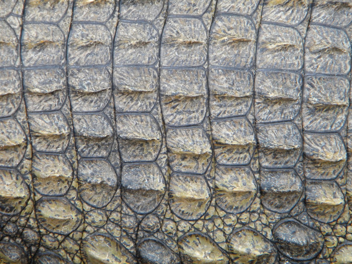 A reptilian may occasionally present with scales, like a crocodile or a dragon.