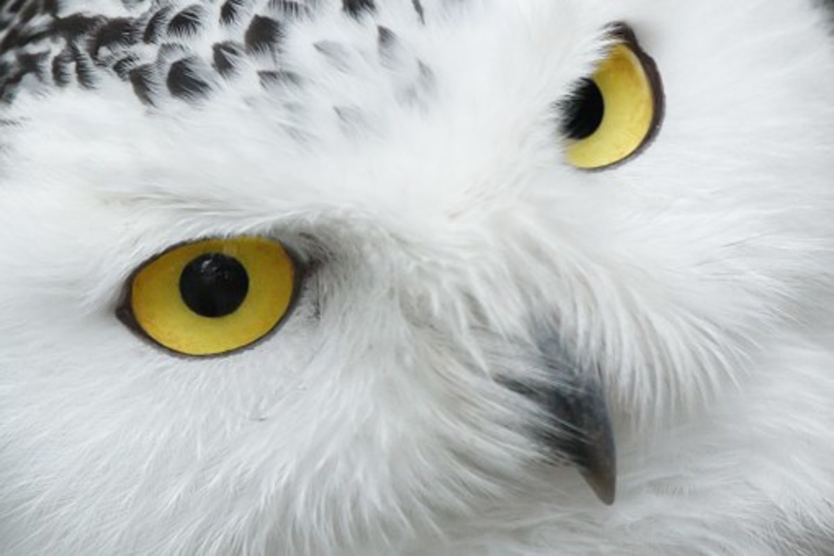 What could the mysterious appearance of an owl signify?