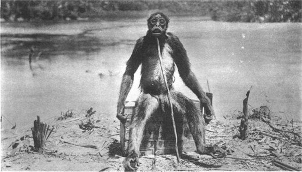The de Loys' ape