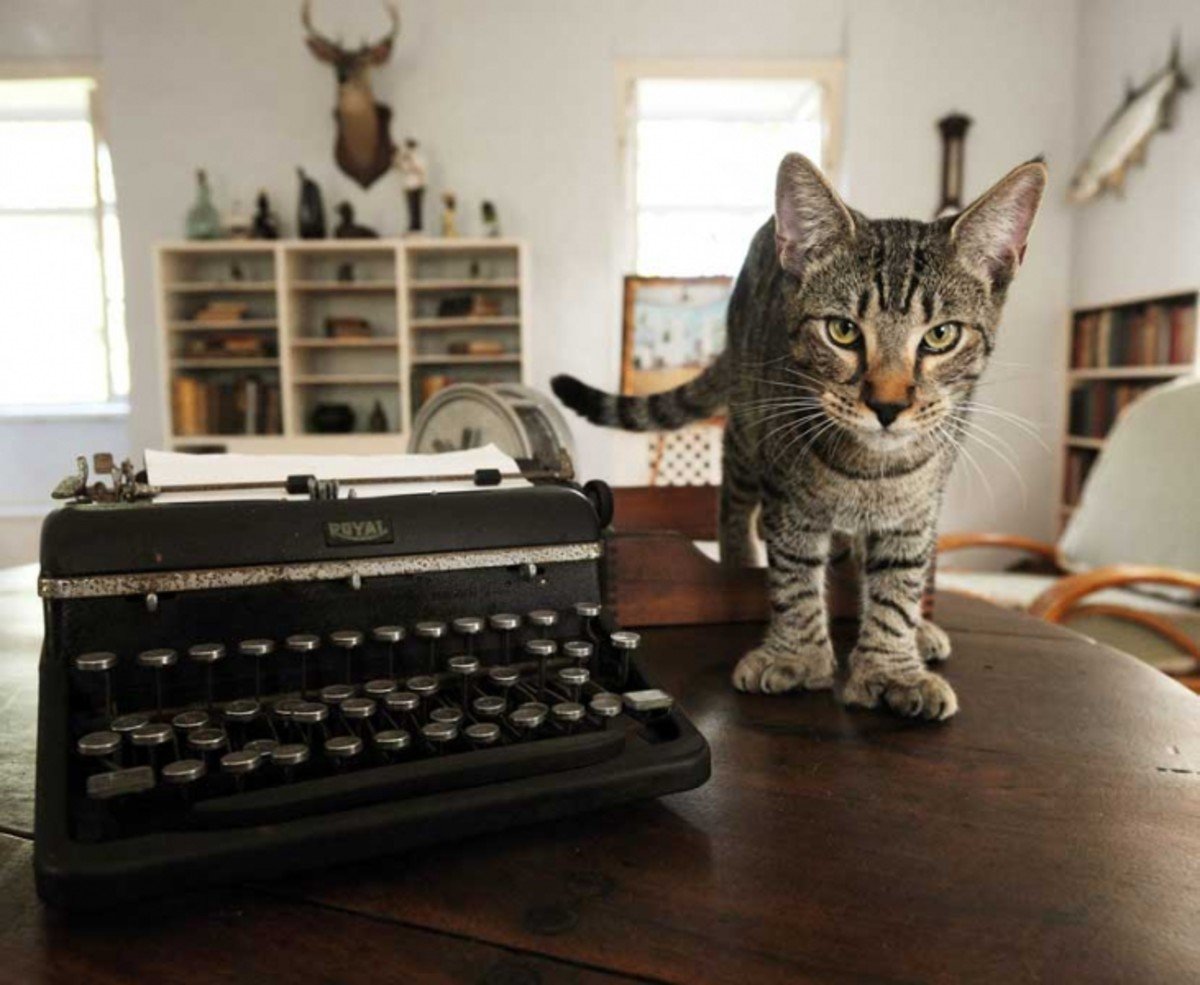 One of the many decedents of Hemingway's famous six toed cats that still reside at Ernest Hemingway House and Museum.