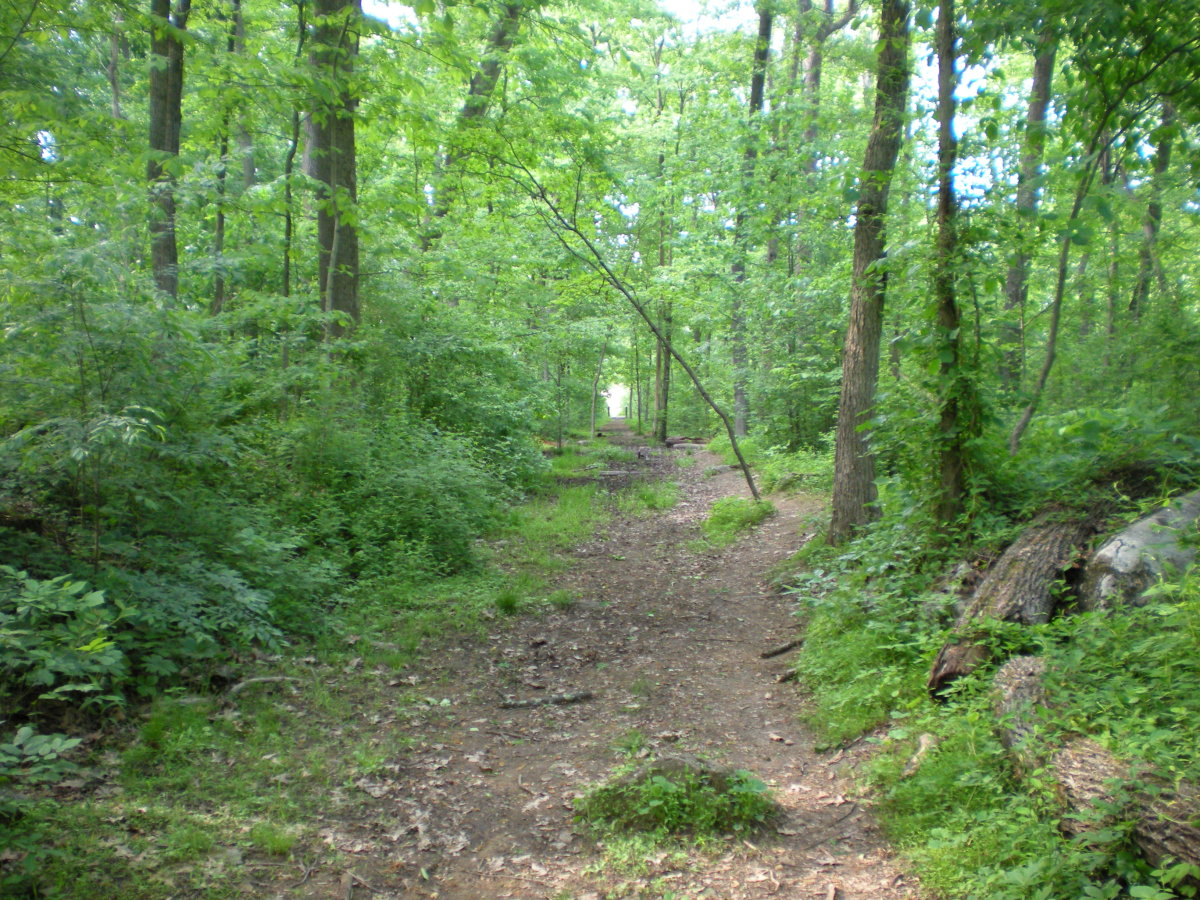 The approximate spot on the trail from Devil's Den where I smelled the mystery cherry pipe tobacco smoke.