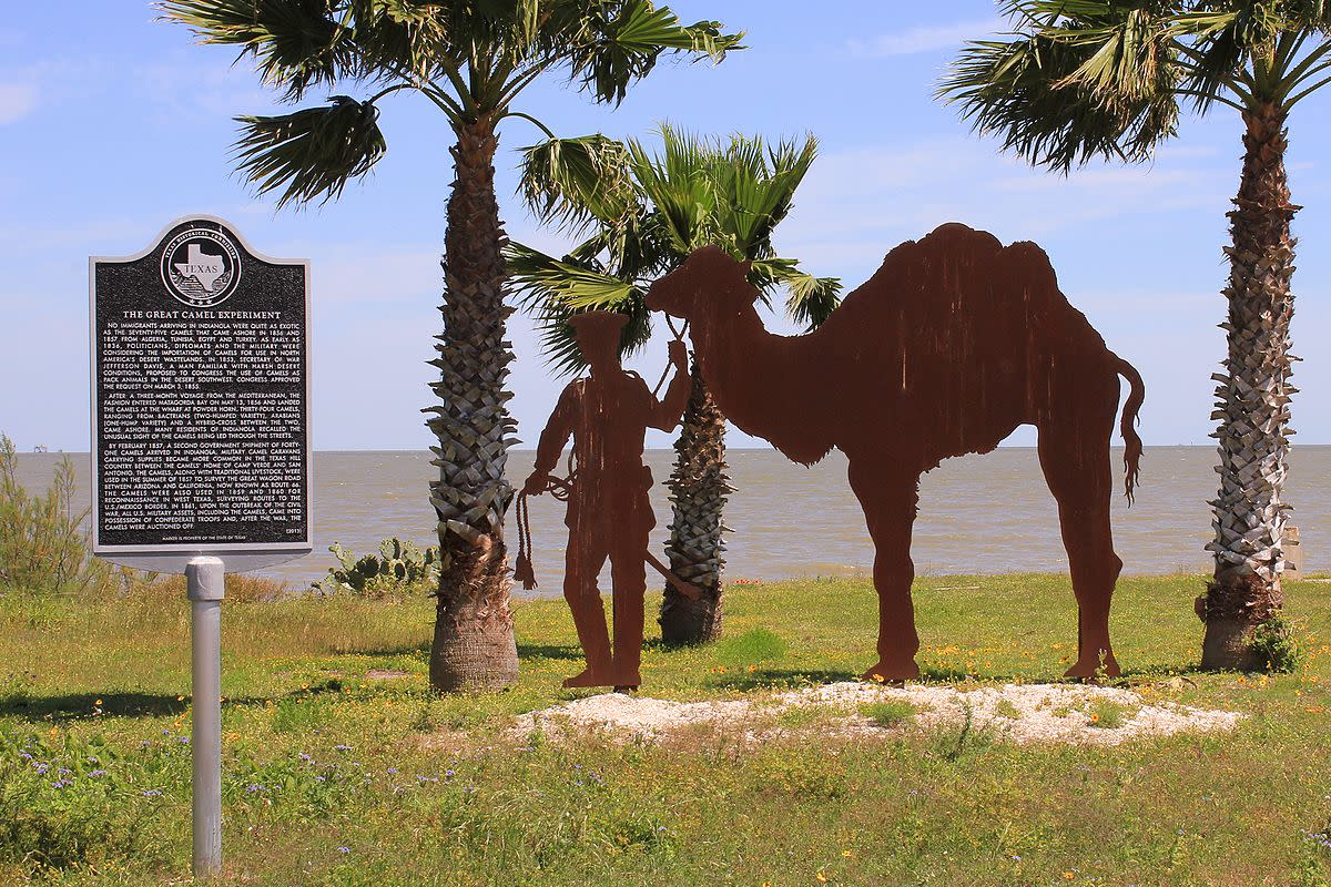 Memorial to the Camel Corps in Texas.