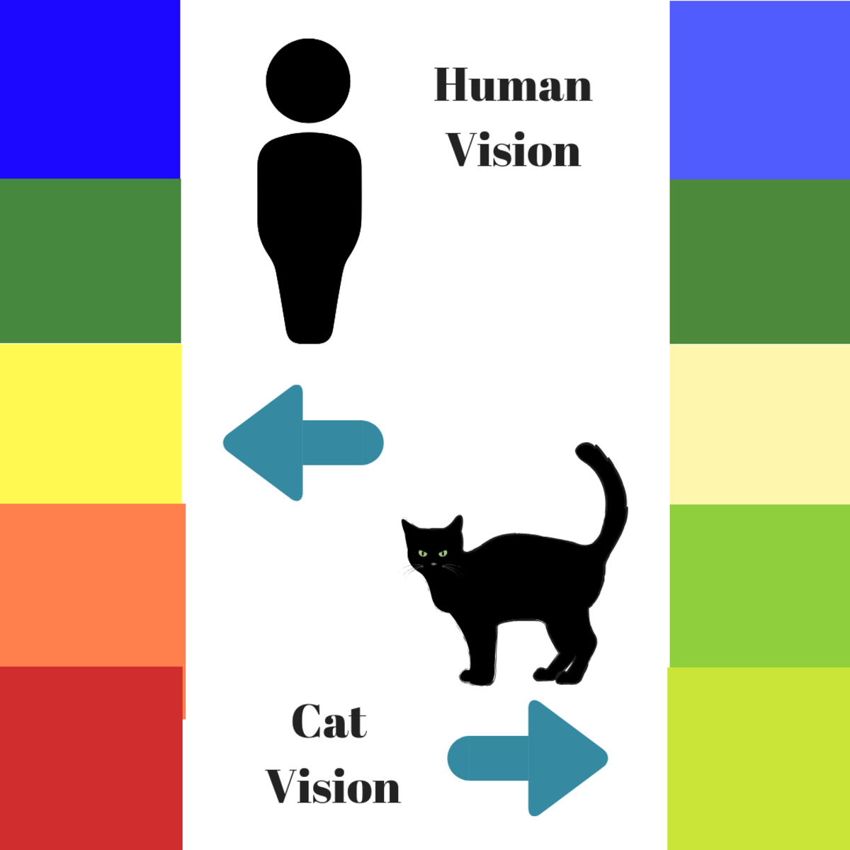 A comparison of the colors humans and cats see.