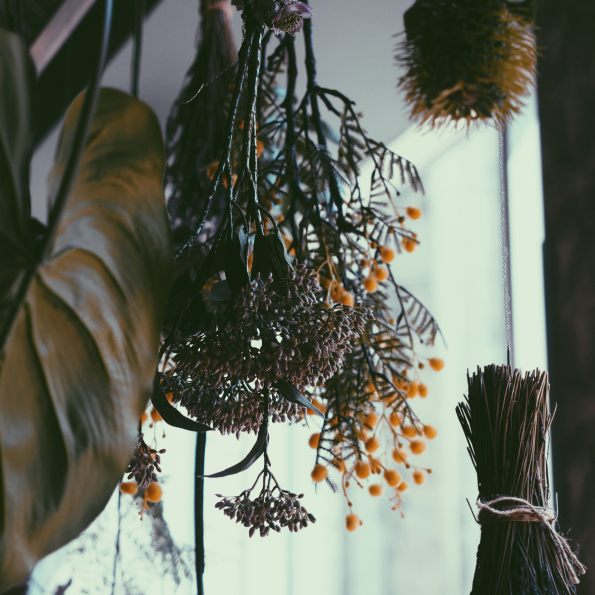 Herbs are commonly used in healing and magickal spell-casting.