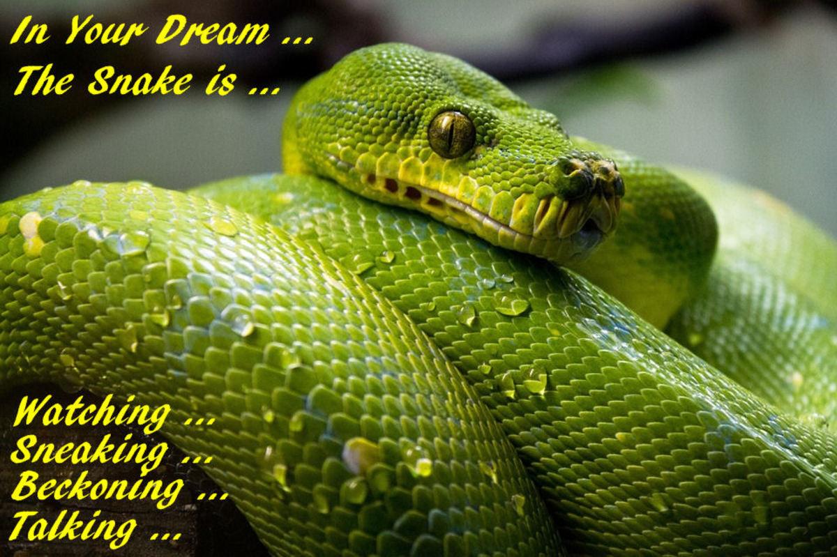A Dream Snake Watching