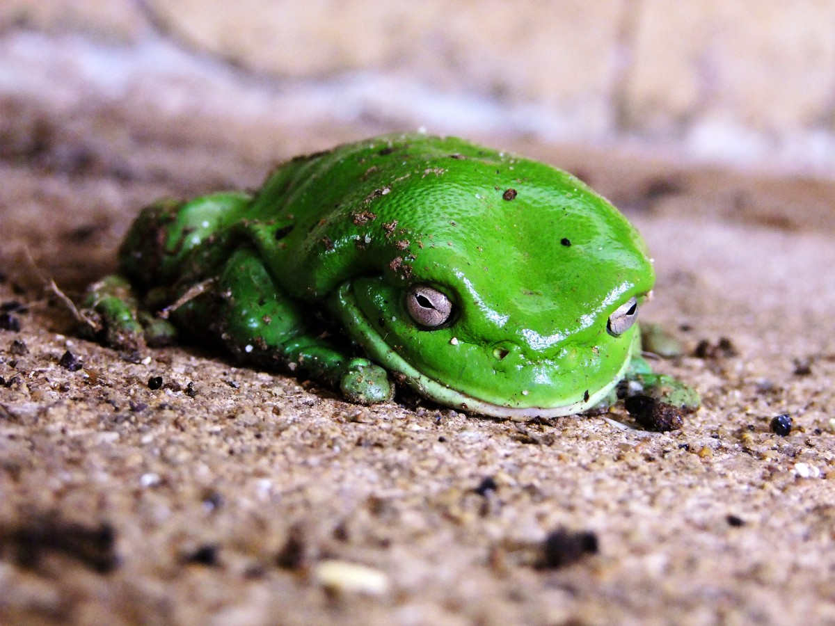 how-to-interpret-frogs-as-dream-symbols