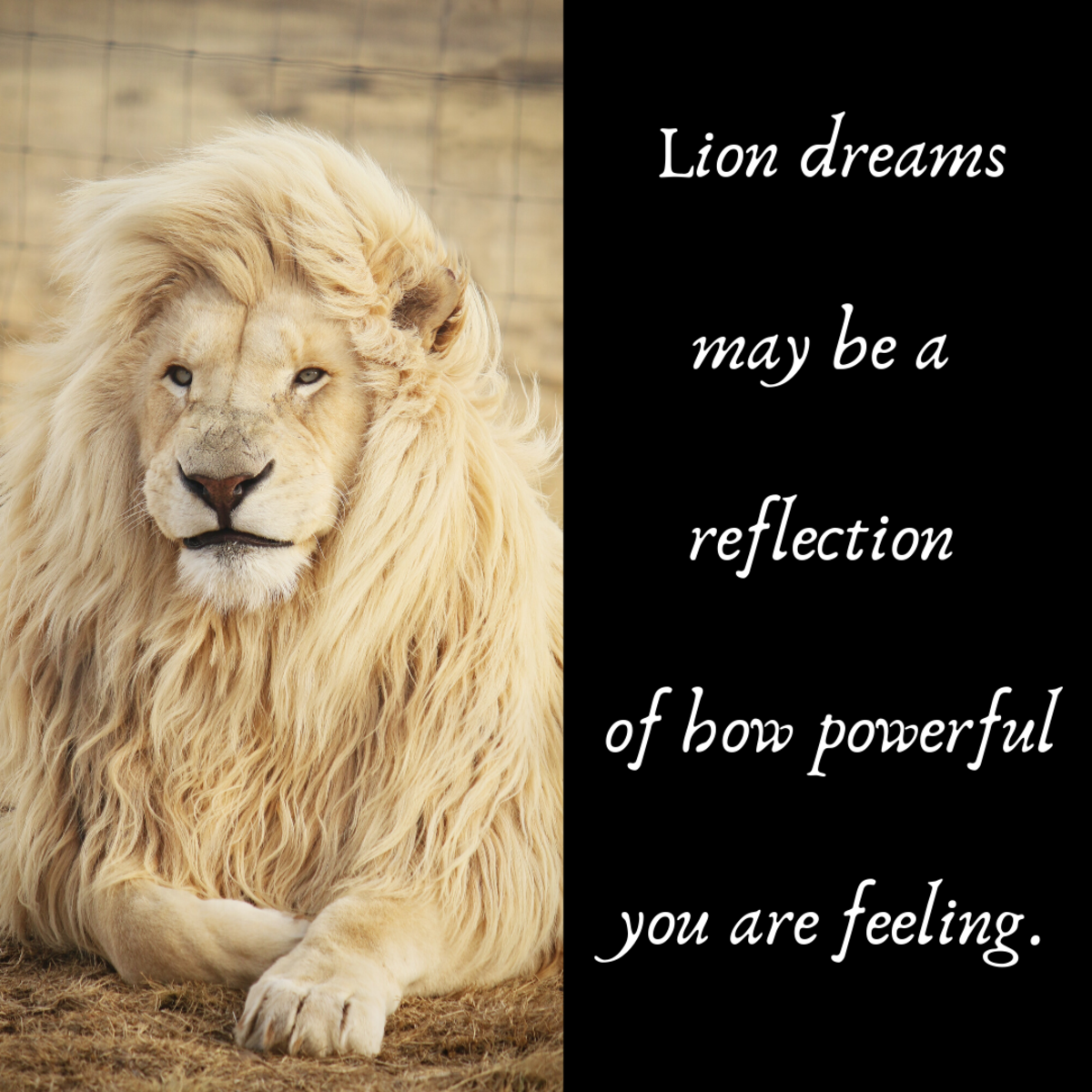 In many cultures, lions are symbols of strength.
