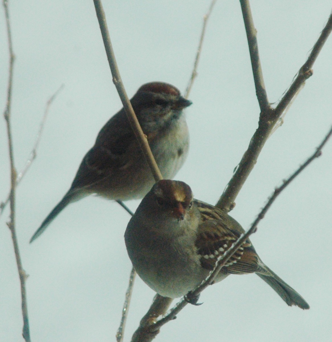 According to the ancient Egyptians, sparrows caught the souls of the recently deceased and carried them to heaven.