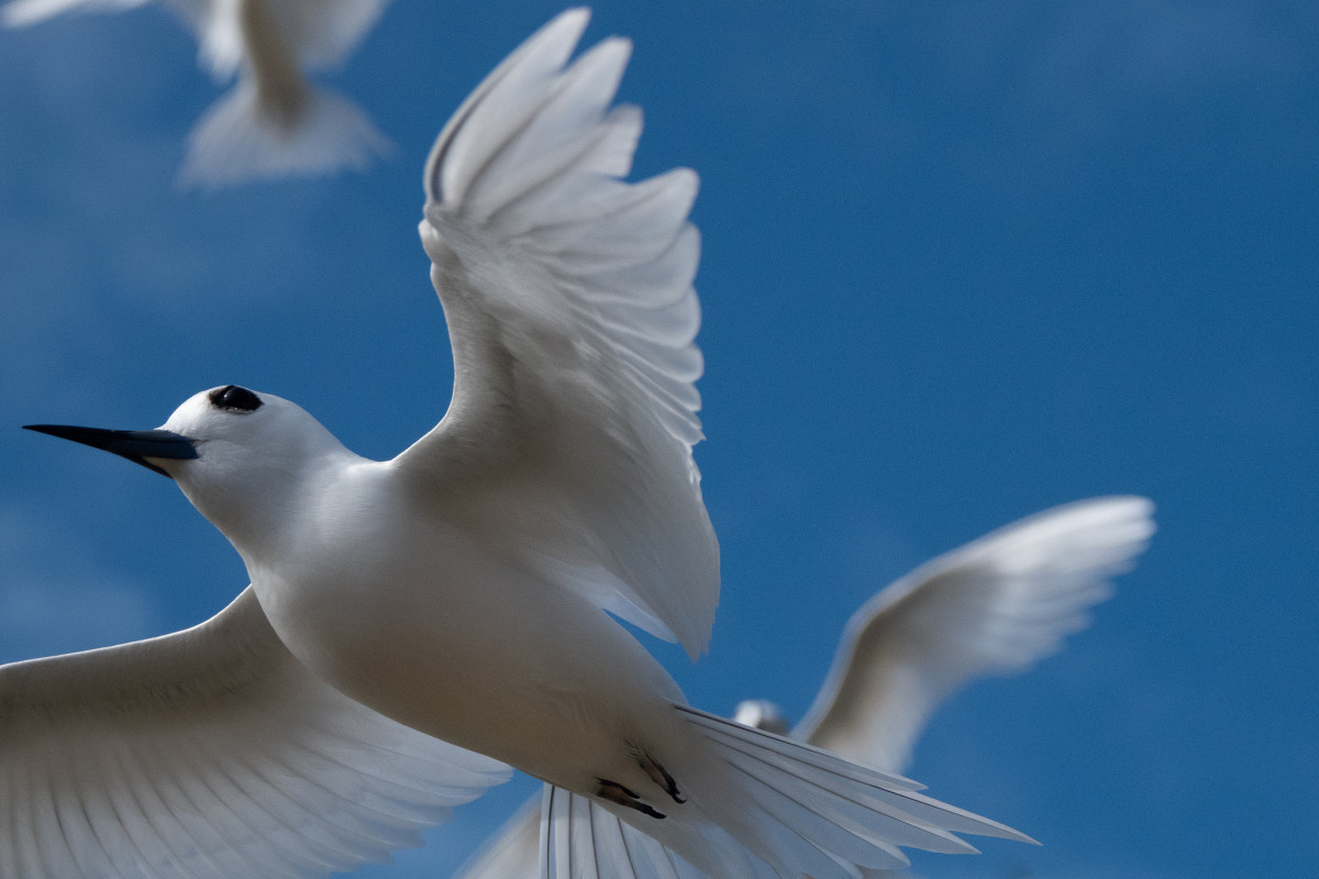 If I see a white bird, what does it mean?