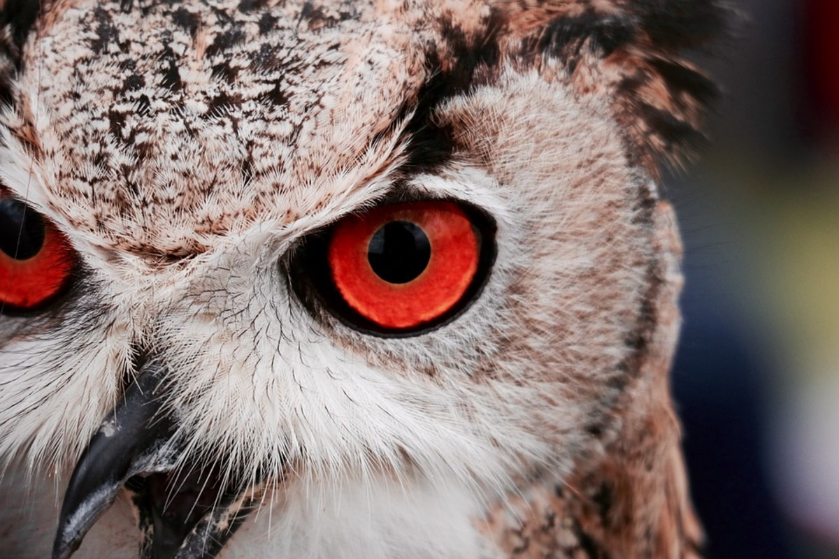 Many believe that Mothman is actually a large owl.