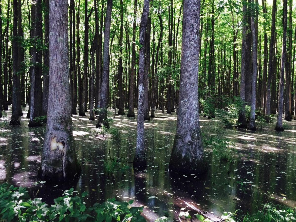 Bear Creek Swamp Alabama