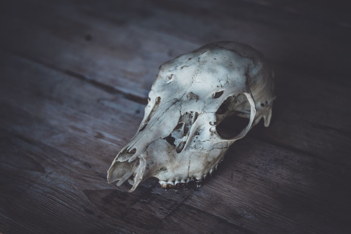 Animal remains remind us of the beauty in life and death.