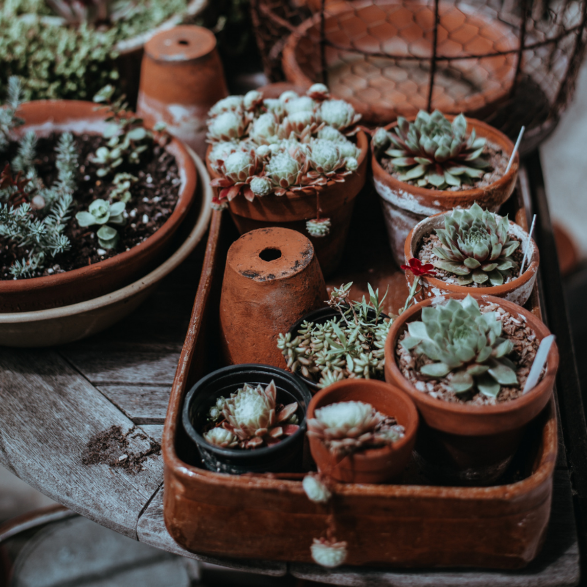 Caring for plants can be a spiritual act.