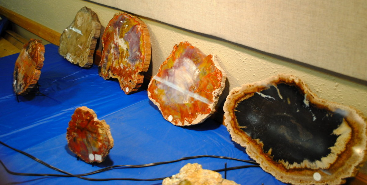 Petrified wood is created when a trees organic matter is replaced by silicate minerals.