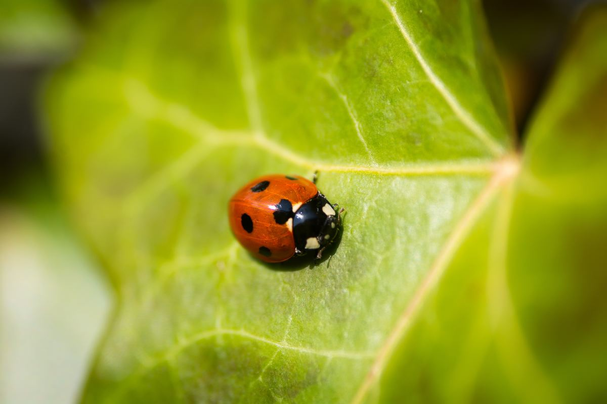 Ladybugs bring good fortune and prosperity.