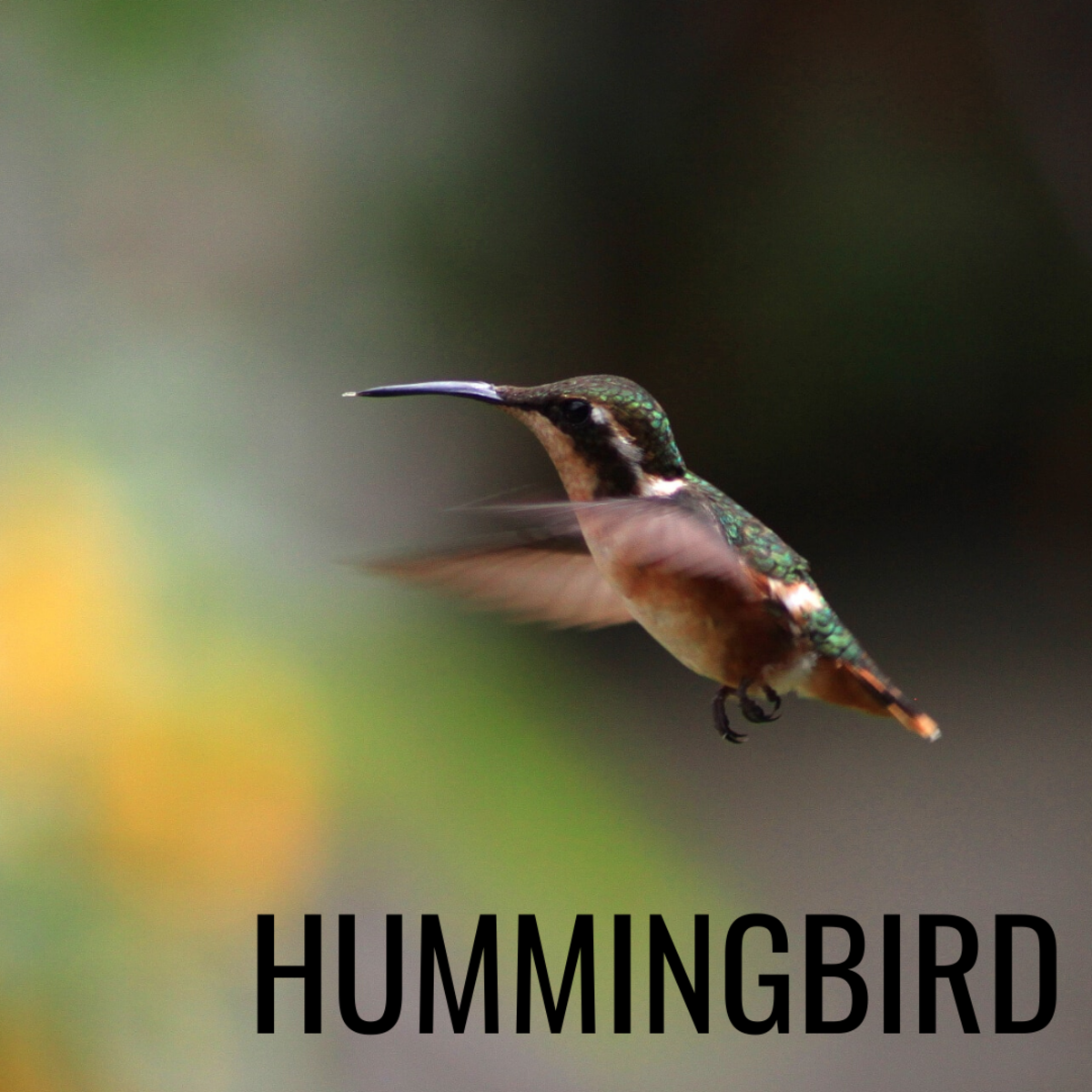 Hummingbirds symbolize love and joy.