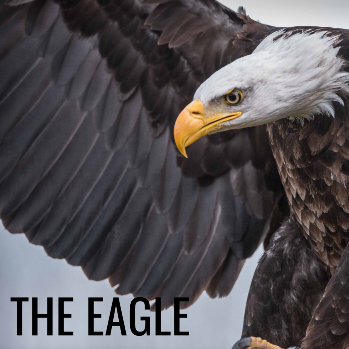 Eagles symbolize freedom, longevity, and strength.