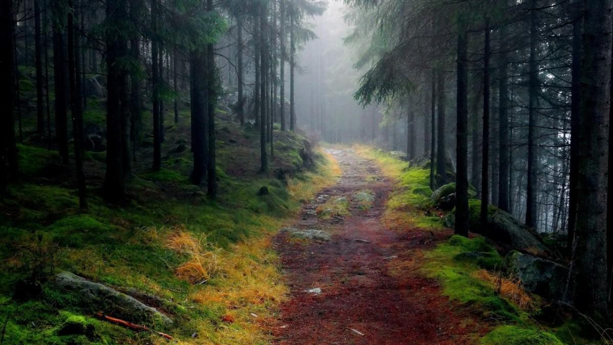 Your path lies ahead.