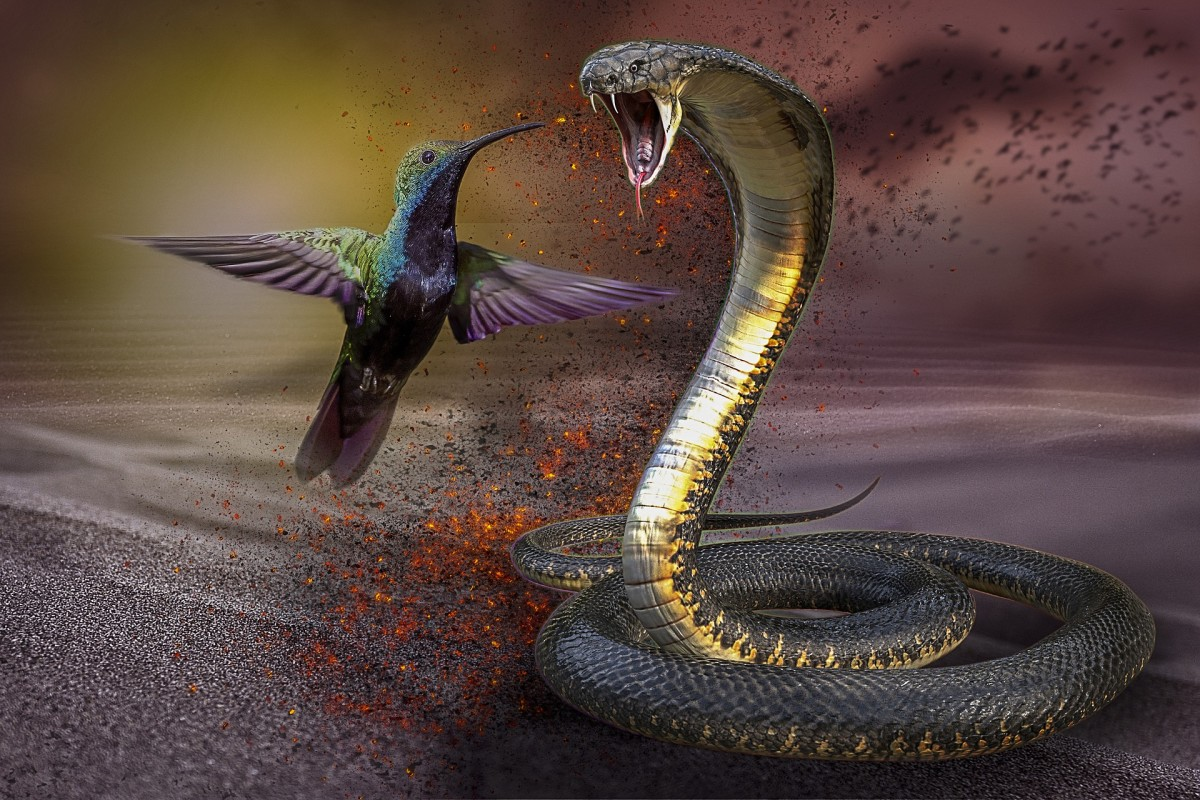 Parapsychologists say that a snake in a dream represents people we do not trust.