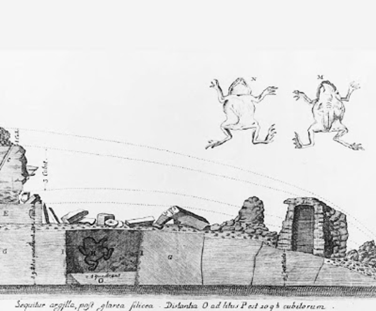 Gråberg's sketch of the toad and the quarry where it was found.