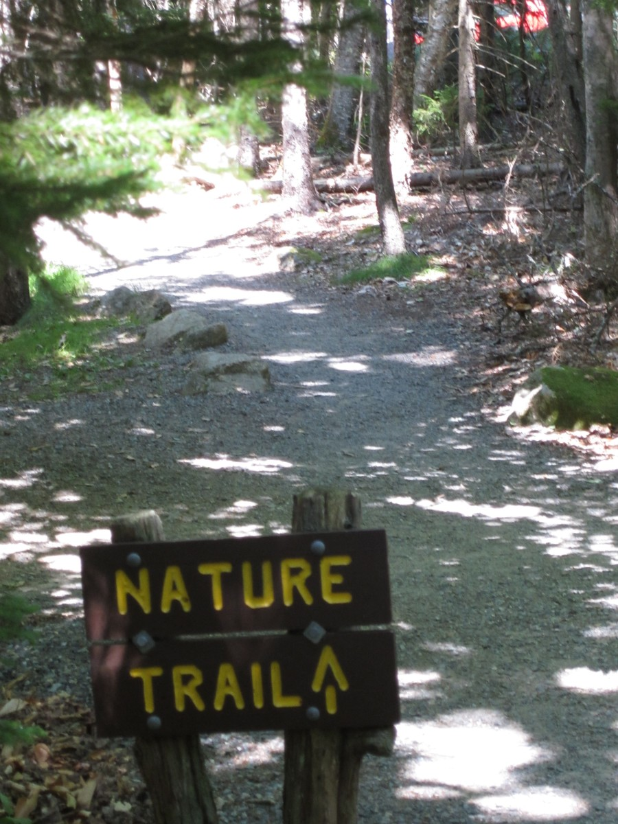 Jordan Pond Nature Trail