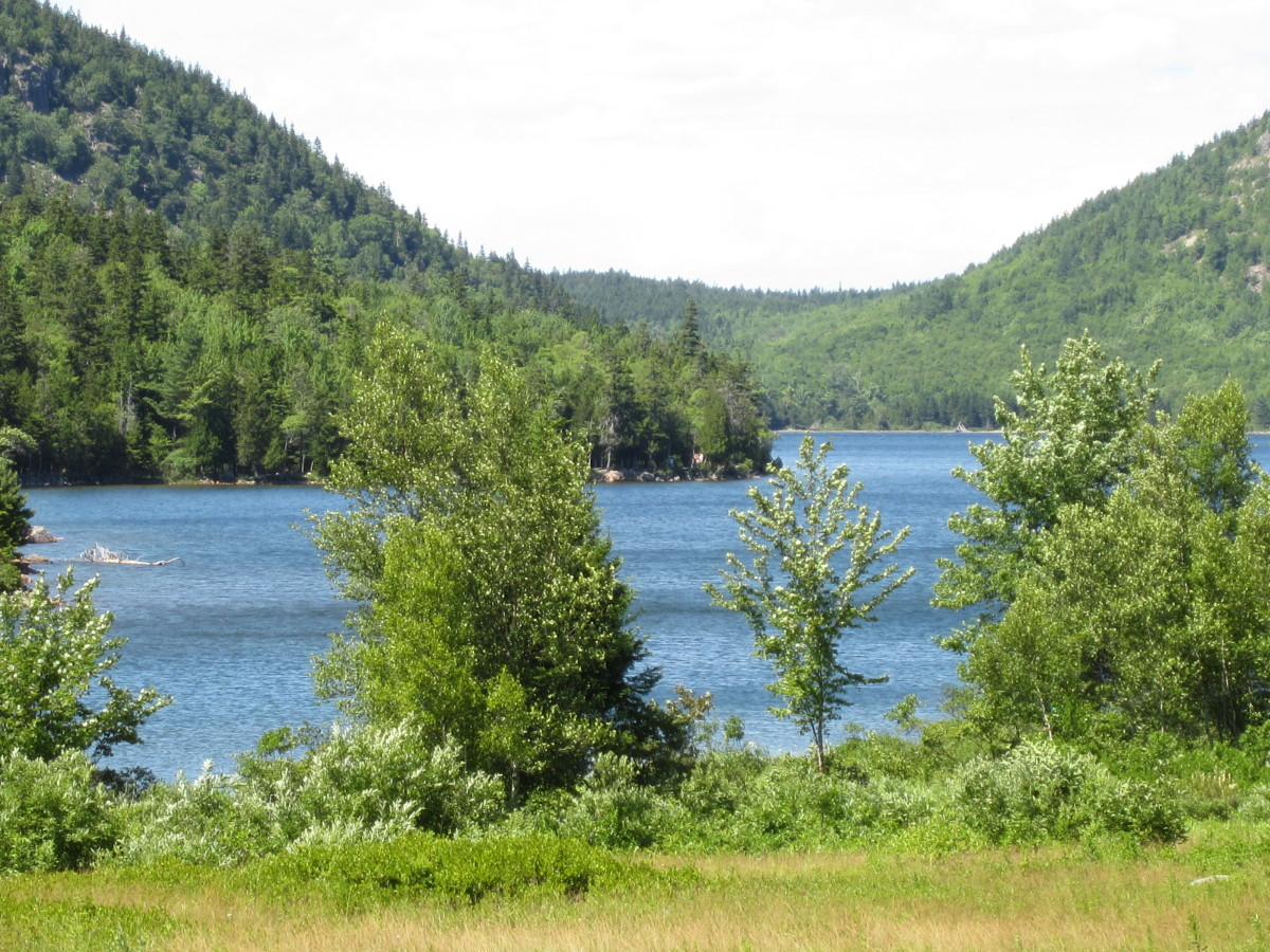 View across the blueberry field to Jordan Pond.