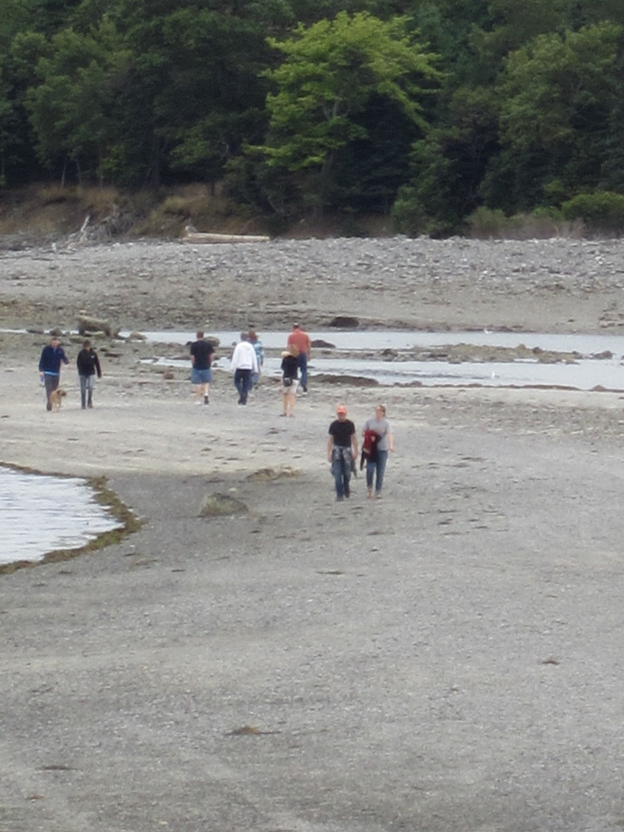 Hikers on Bar Island Trail at low tide closer to Bar Island.