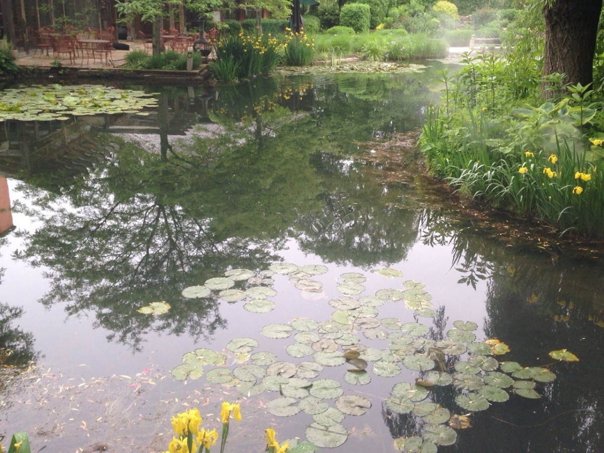 The Lily Pond reminiscent of Monet's own pond in Giverney?